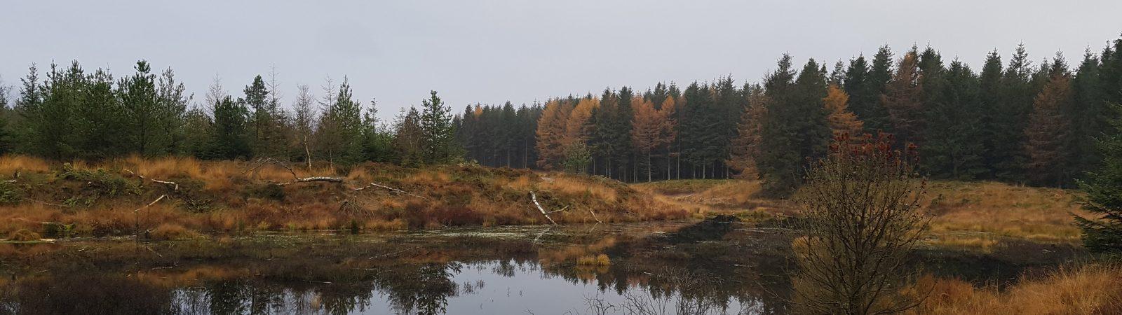 En af de mange småsøer hvor bæverne færdes i Klosterheden