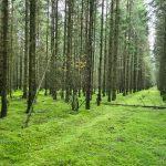 """DVL vandretur 101021. Harrild Hede. """"Grøn skov""""."""