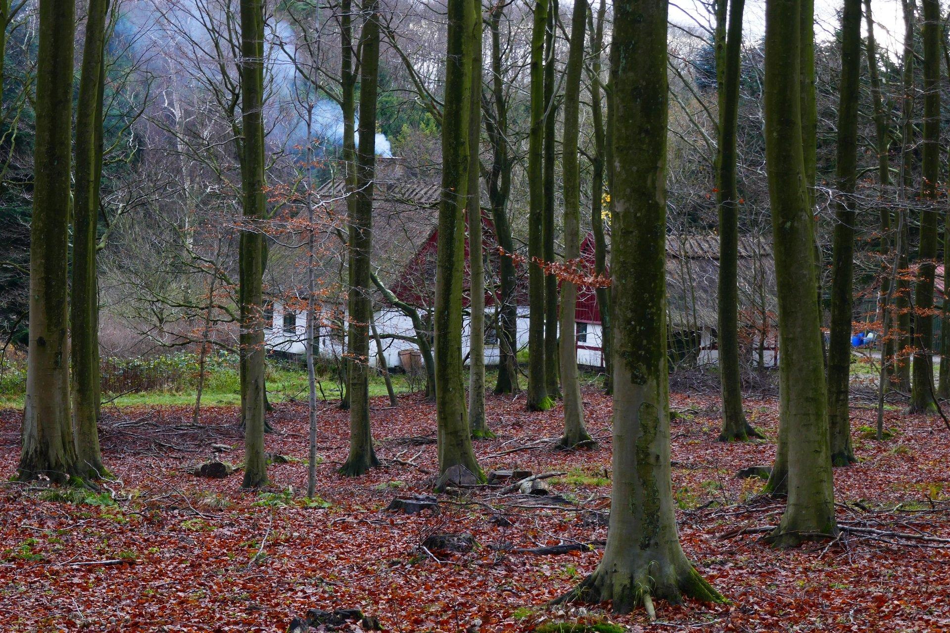 November i Boserup Plantage. Foto Karen Schmolke