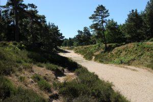 Drivvejen/Ochsenweg ved Læk/Leck i Sydslesvig.
