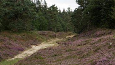 Drivvejen i Langenberger Forst
