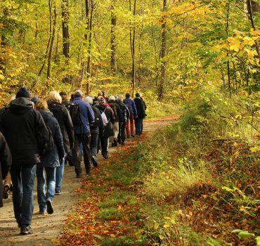 Kleinbahnsporet ved Jørgensgård skov