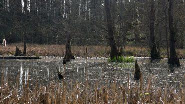 Karsesøen i Rumohrsgård Dyrehave