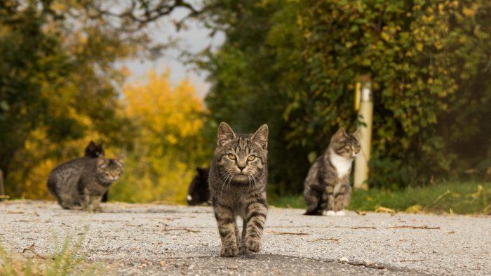 Møder kattene i Stevning