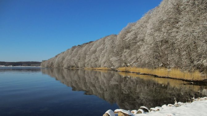 Kollund Skov ved Flensborg Fjord