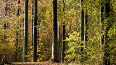 Gravhøjene i Roden skov