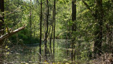 Ny skovsø i Pamhule Skov.
