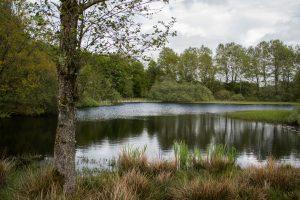 Skovsø ved Schmidts eng