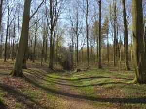 Hjermind Skov