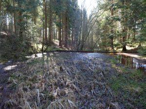 Okkerdam i Hjermind Skov